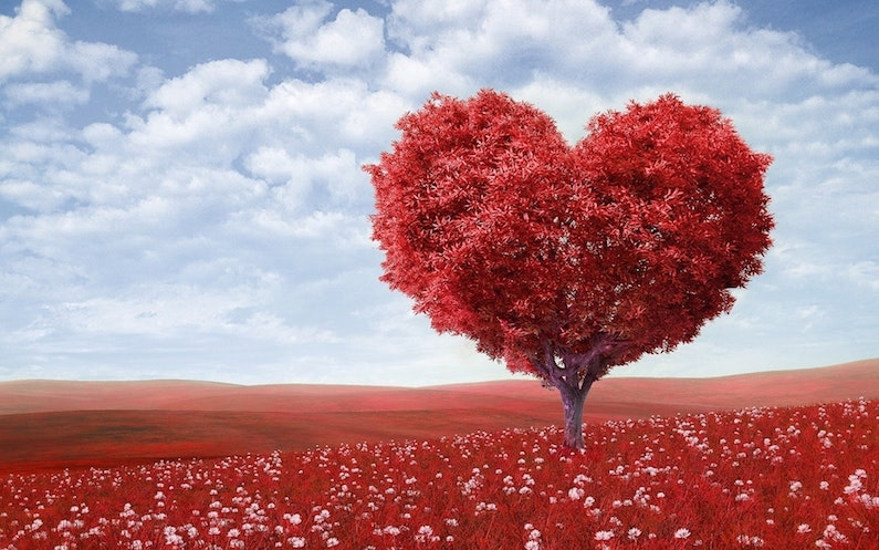 Picture of a love heart tree